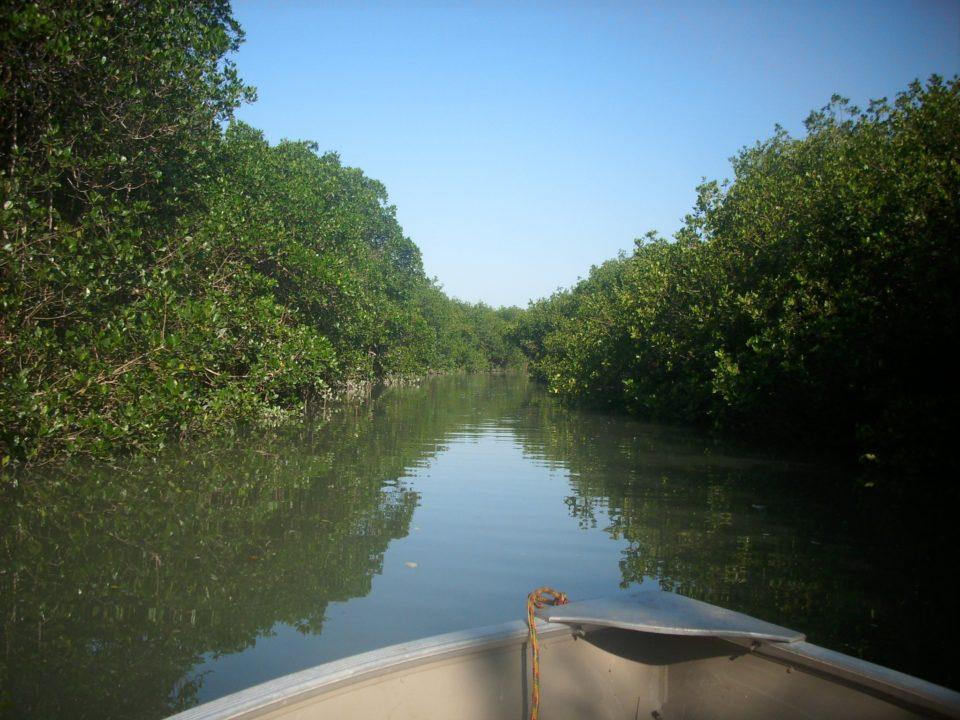 EL SALADO ESTUARY IN PUERTO VALLARTA & EL SALADO ESTUARY IN PUERTO VALLARTA - Blog Canopy River Puerto ...