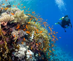 Puerto-Vallarta-Jalisco-México-Scuba-Diving
